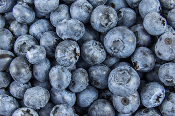 Background covered with fresh ripe blueberries.