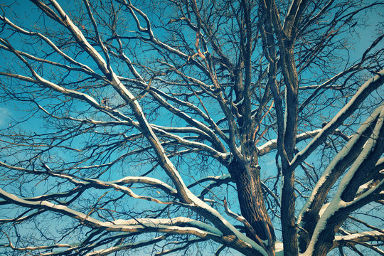 the branches of a large oak on a background of blue sky