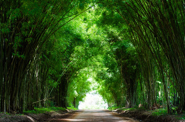 Tunnel bamboo trees and walkway
