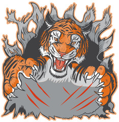 Tiger Mascot Ripping out Background and Clawing Vector Template