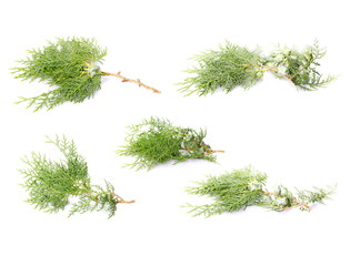 set green fir branch isolated on white background