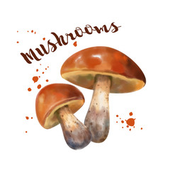 Watercolor Vector Mushroom