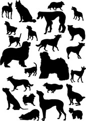 twenty three black isolated on white dogs