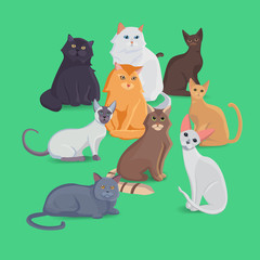 Collection of Cats of Different Breeds. Set cats.