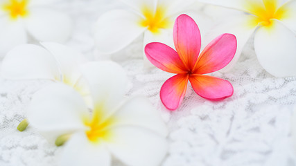 Pink Frangipani among white flowers