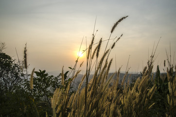 Sunset with mountain view and grass