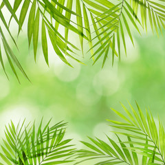 Frame of palm leaves with space for text on blurred foliage background.