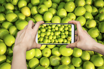 A tourist taking a photo of green jujubes with smartphone camera