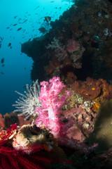 Beautiful reef deep in the indian ocean.