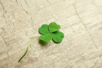 Green four-leaf clover on wooden background