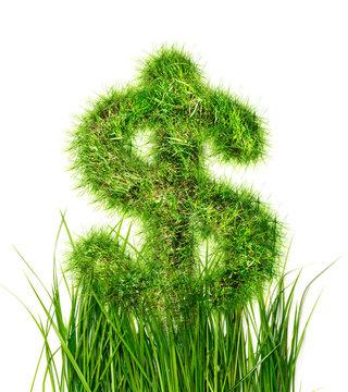 Dollar sign in green grass
