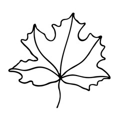 Vector maple leaf icon. Outlined