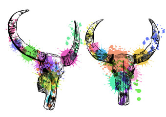 Cow watercolor skull- hand drawn vector illustration, isolated on white