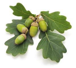 Green acorns.