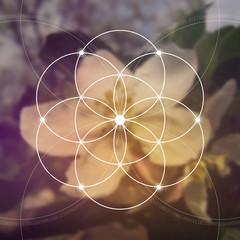 Flower of life - the interlocking circles ancient symbol. Sacred geometry. Mathematics, nature, and spirituality in nature. Fibonacci row. The formula of nature. Self-knowledge in meditation.