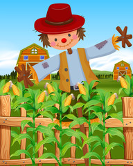 Scarecrow in the corn field