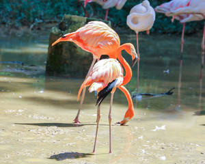 Flamingo Bird exotic