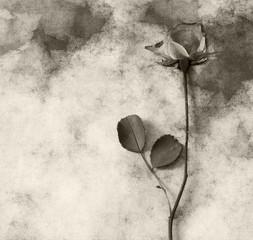 Condolence card - dark rose