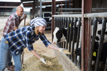 Young woman taking care of cows in cows barn