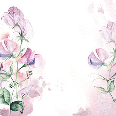 Invitation card with sweet pea and watercolor splash. Floral hand-painted greeting card