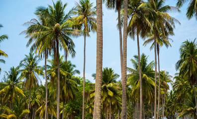 Green Palm trees at tropical island. summer exotic natural landscape. Thailand island landscape.