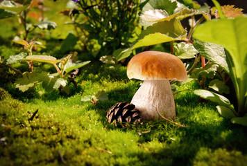 junger Steinpilz im Wald