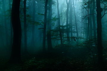 Papiers peints Forets Forest of Deciduous Trees at Night Illuminated by Moonlight, Spooky Mystic Atmosphere