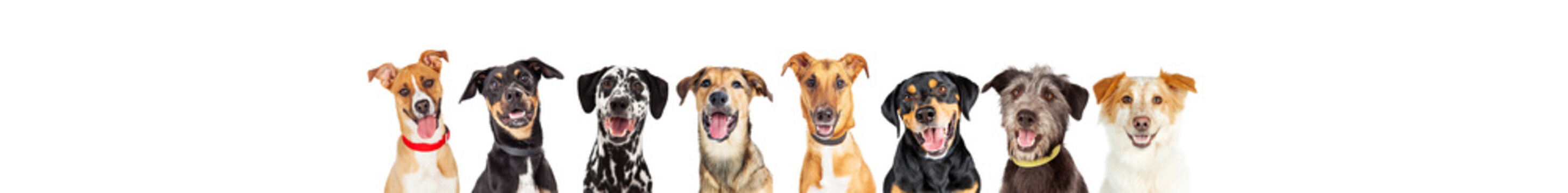 Happy Dogs In A Row - Leaderboard