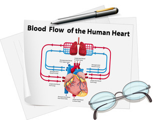 Blood flow of human heart on paper