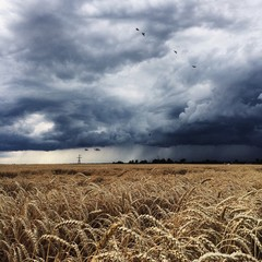 thunderstorm, dark clouds and rain