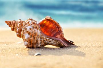 Big seashell on the sand on the beach