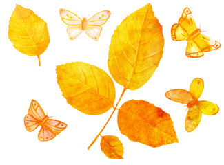 Watercolor golden toned leaves and butterflies on white