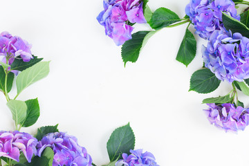 blue and violet hortensia flowers