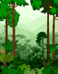 Rainforest vector illustration. Vector Green Tropical Forest jungle