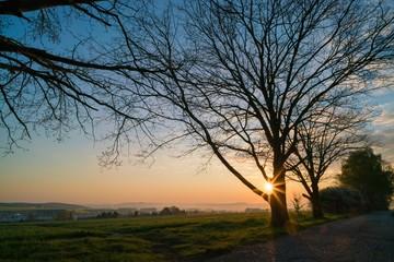 Sunrise and one tree