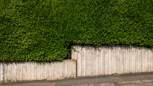 Sichtschutzhecke Stock Photo And Royalty Free Images On Fotolia Com