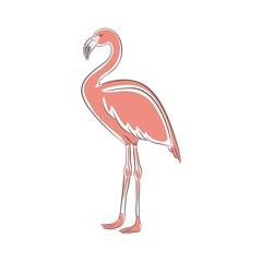 Flamingo  Bird Animal Illustration