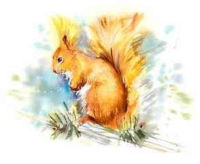 Squirrel. Decoration with wildlife scene. Pattern from forest inhabitant. Watercolor hand drawn illustration.