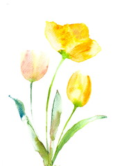 Beautiful tulip on white, watercolor flower painting