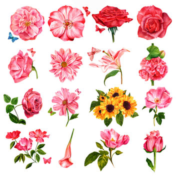 Set of vector watercolor flowers, painted on white background