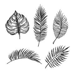 Hand drawn vector illustration - Palm leaves. Tropical design el