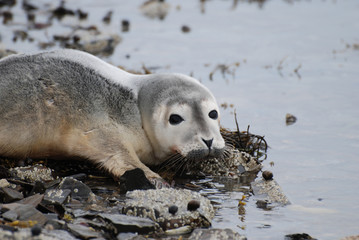Harbor Seal Pup on the Shore