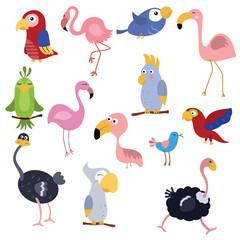 Set funny African birds