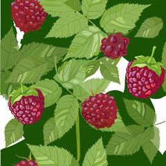 raspberries seamless pattern