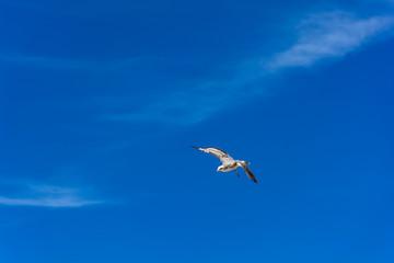 Bird Fly in The Blue Sky