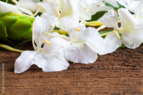 White ginger flowers it also called garland lily sweet white gi white ginger flowers it also called garland lily sweet white gi mightylinksfo