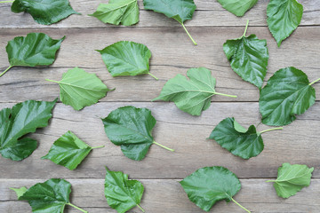 Green Leaves of Mulberry disrupted on brown wooden background.