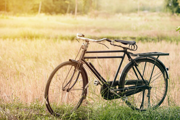 Vintage Bicycle with Summer grass field ; vintage filter style