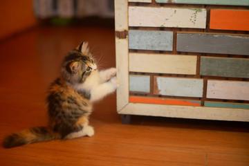 Portrait of small cute kitten