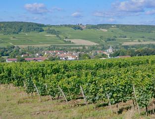 Papiers peints Vignoble Weinbau in Rheinhessen bei Ingelheim,Rheinland-Pfalz,Deutschland